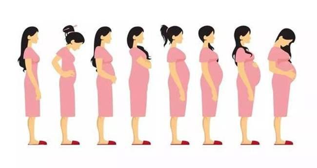 孕中期孕妇与胎儿变化