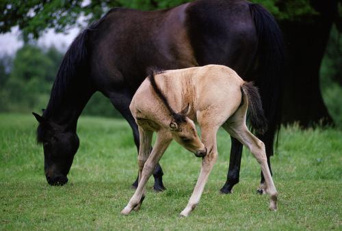 小姑娘变成驴和马