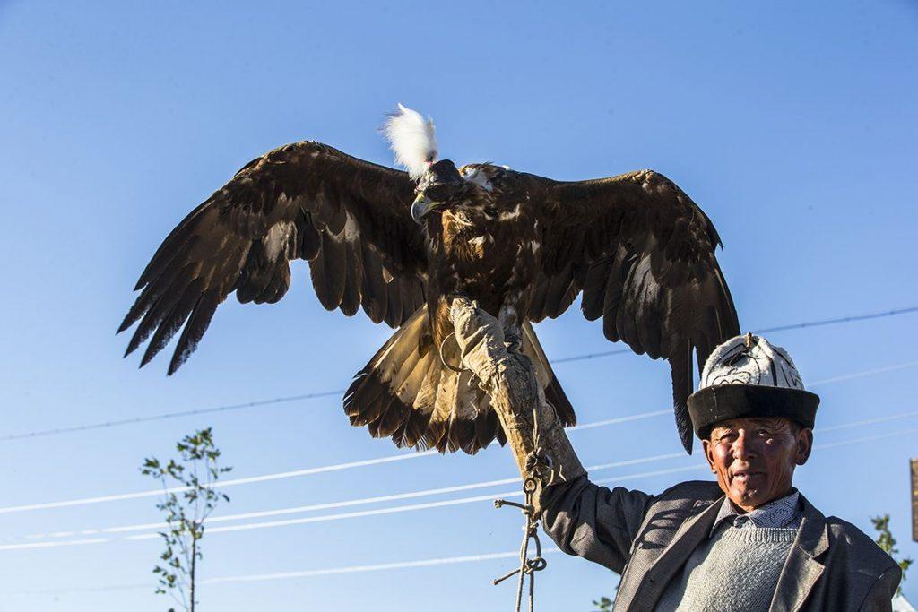 伏瓦和他的鹰朋友