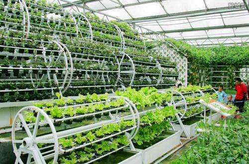 中国的持续农业如何发展