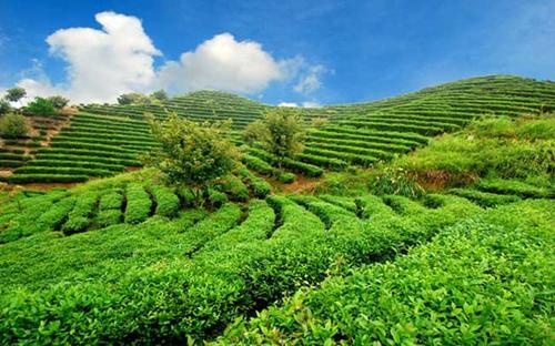 可持续发展的农业