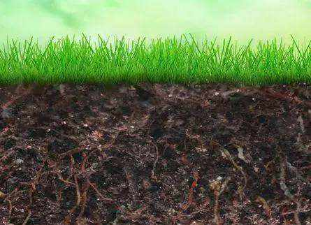 土壤的形成
